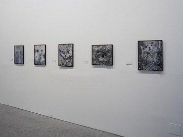 Vista de sala de la exposición. Brassaï. Del surrealismo al informalismo, 1994
